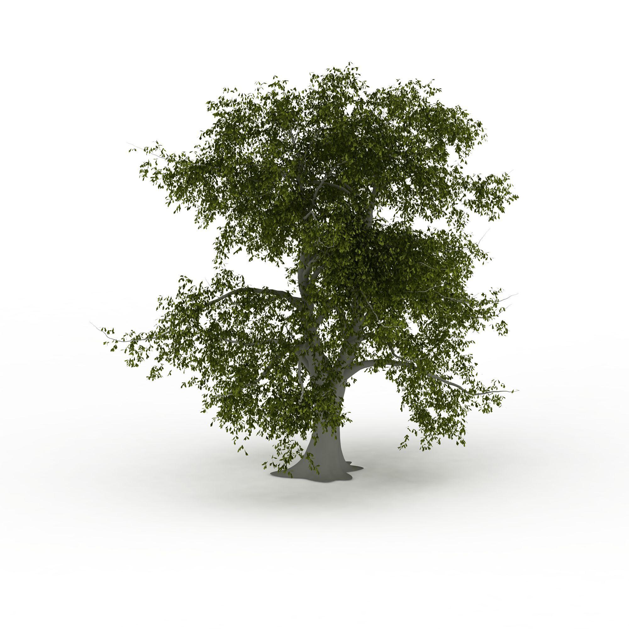 植物 树 大树3d模型 大树png高清图  大树高清图详情 设计师 3d学院
