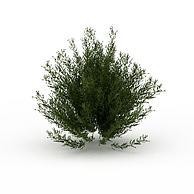 园林绿化灌木3D模型3d模型