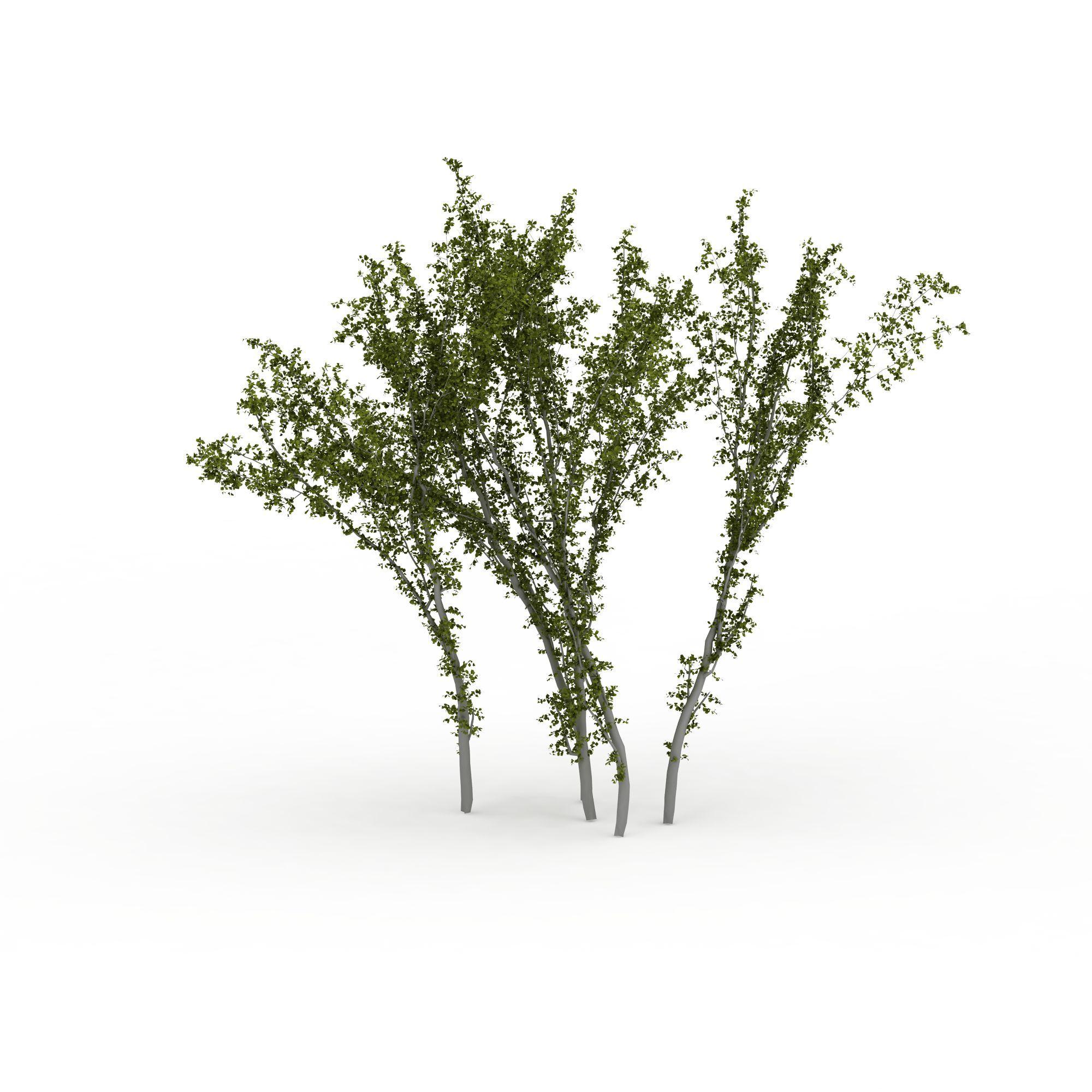 植物 树 小树林3d模型 小树林png高清图  小树林高清图详情 设计师 3d