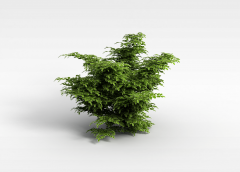 园林绿化树3D模型3d模型