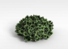 观赏绿植模型