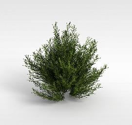 3d园林绿化灌木模型