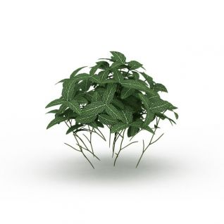 观叶植物3d模型