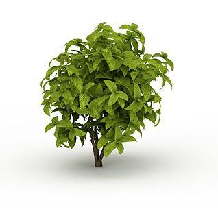 绿色矮灌木3d模型