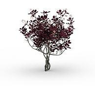 红色开花灌木3D模型3d模型