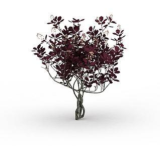 红色开花灌木3d模型