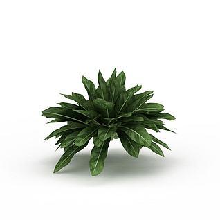 观叶绿植3d模型