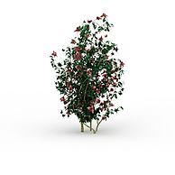 开花灌木3D模型3d模型