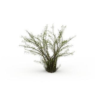 灌木枝3d模型