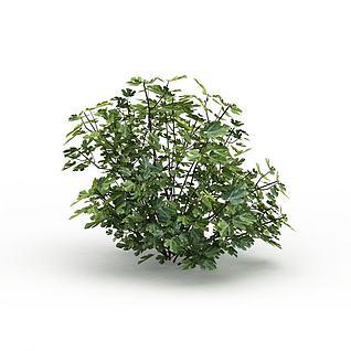 矮灌木丛3d模型