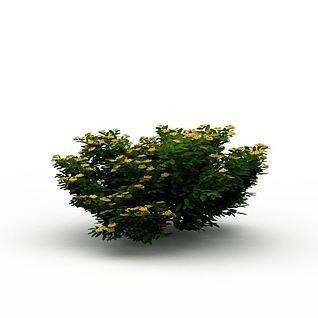 公园观赏绿植3d模型