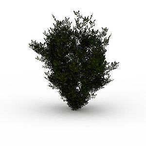灌木植物模型