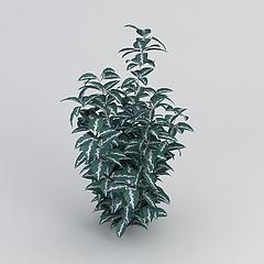 观叶绿植3D模型3d模型