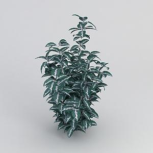 3d观叶绿植模型