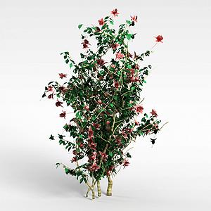 开花灌木模型