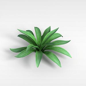 阔叶绿植模型