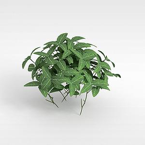 观叶植物模型
