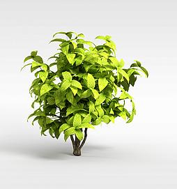 绿色矮灌木模型