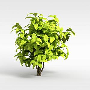 綠色矮灌木模型