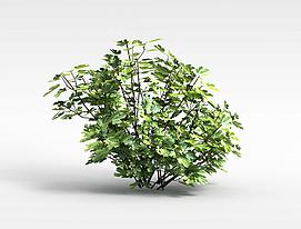 矮灌木丛模型