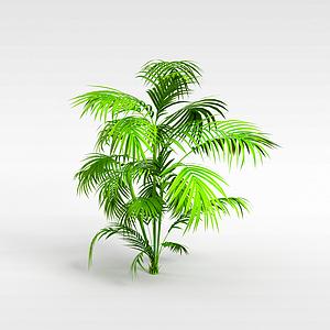 热带灌木模型