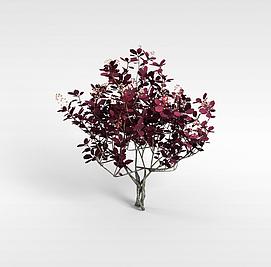 红色开花灌木模型