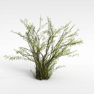 3d灌木枝模型