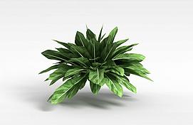 观叶绿植模型