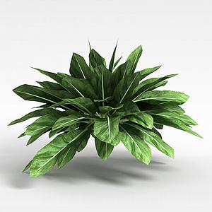 觀葉綠植模型