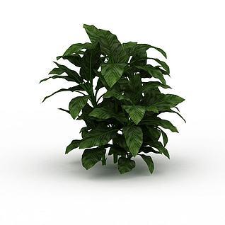 灌木植物3d模型