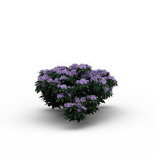 灌木紫色花株3d模型