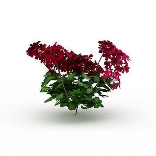 观赏绿植3d模型