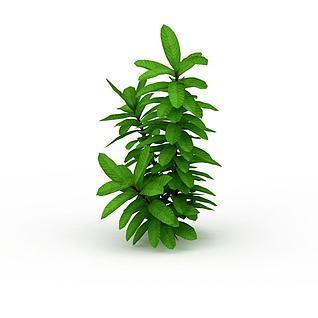 观叶绿植灌木3d模型