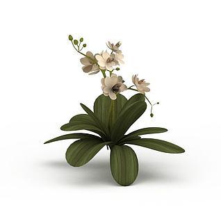 开花装饰绿植3d模型