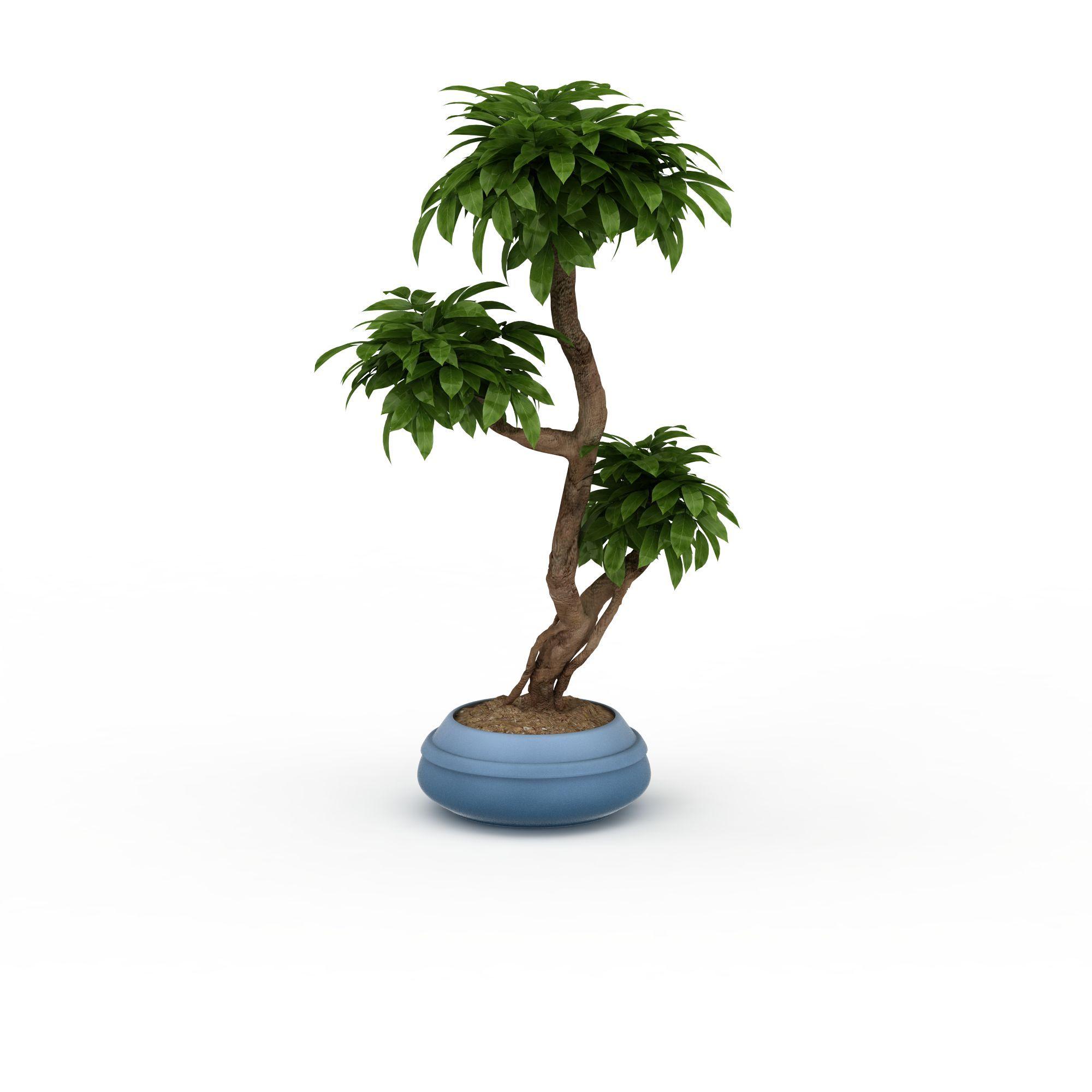 异形树盆景高清图下载