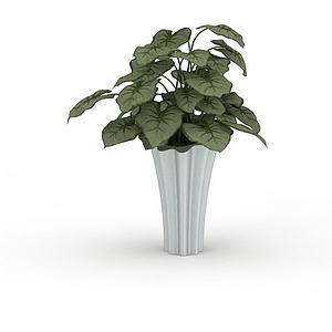 觀葉花盆模型3d模型