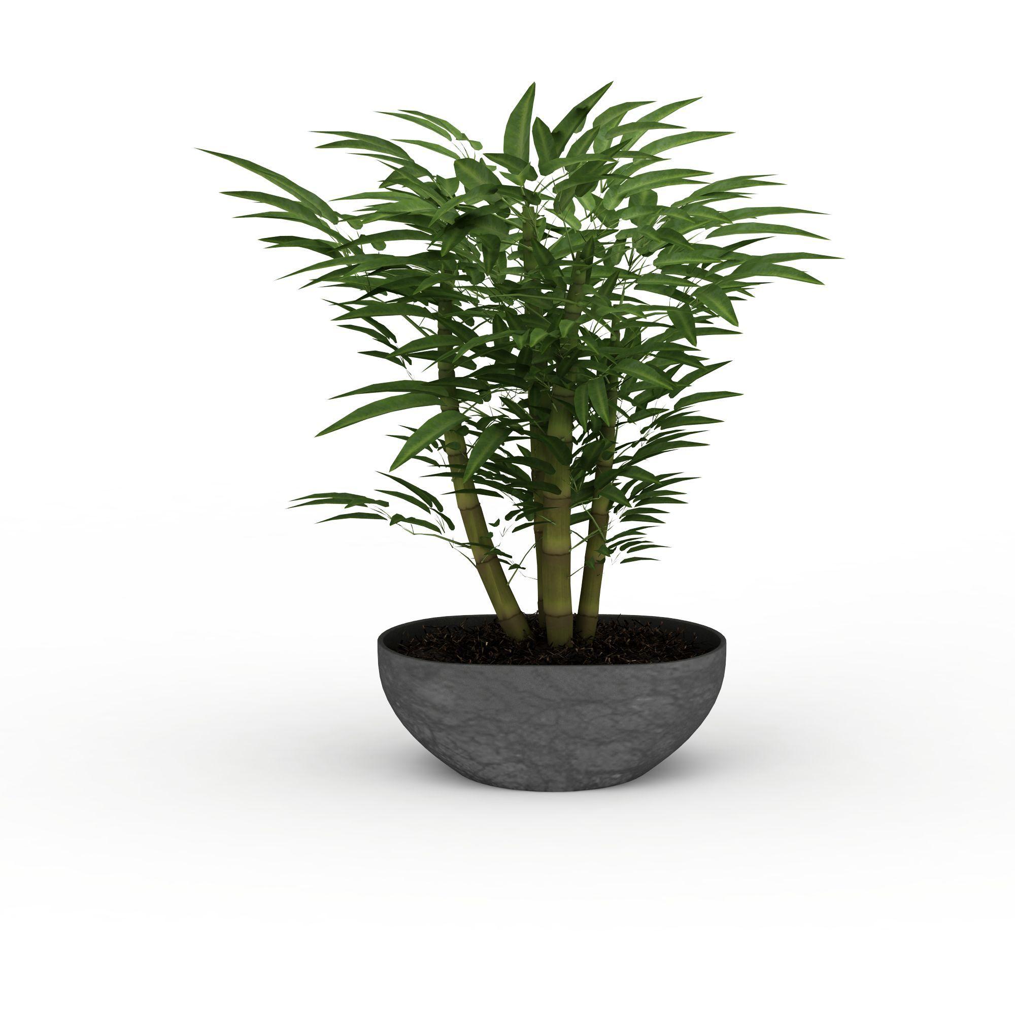 日用饰品 陈设品 矮竹子盆景3d模型 矮竹子盆景png高清图  矮竹子盆景