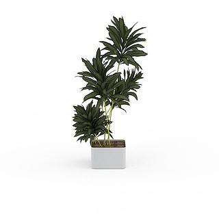 绿叶植物盆栽3d模型