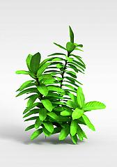 观叶绿植灌木3D模型3d模型