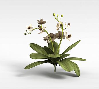 开花装饰绿植