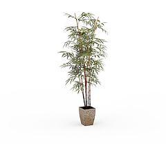 观赏竹子盆栽模型3d模型