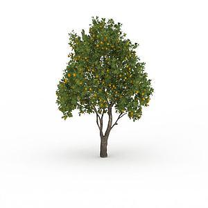 桔子樹模型