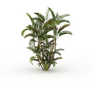 热带<font class='myIsRed'>植物</font>3d模型