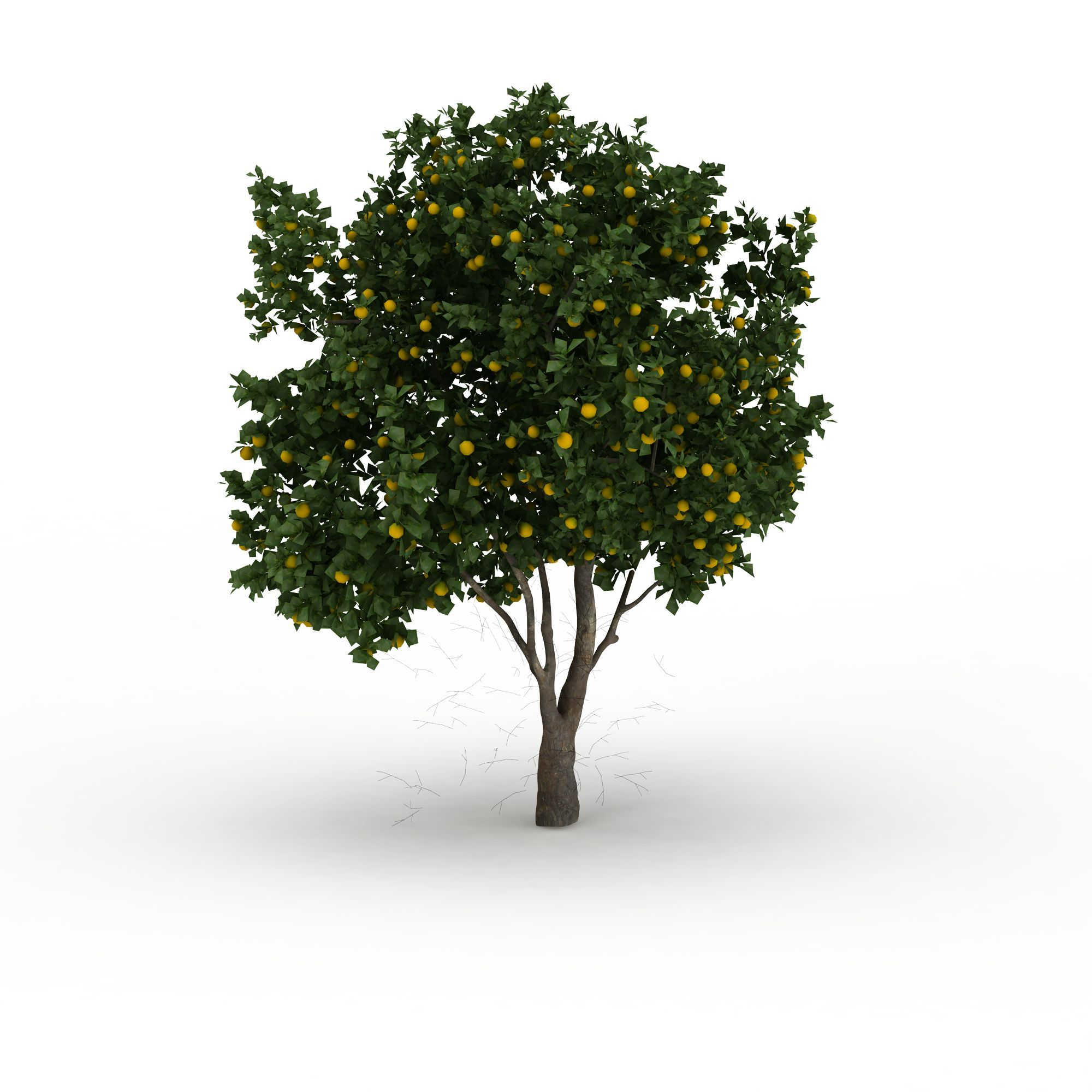 橘子树简笔画底板