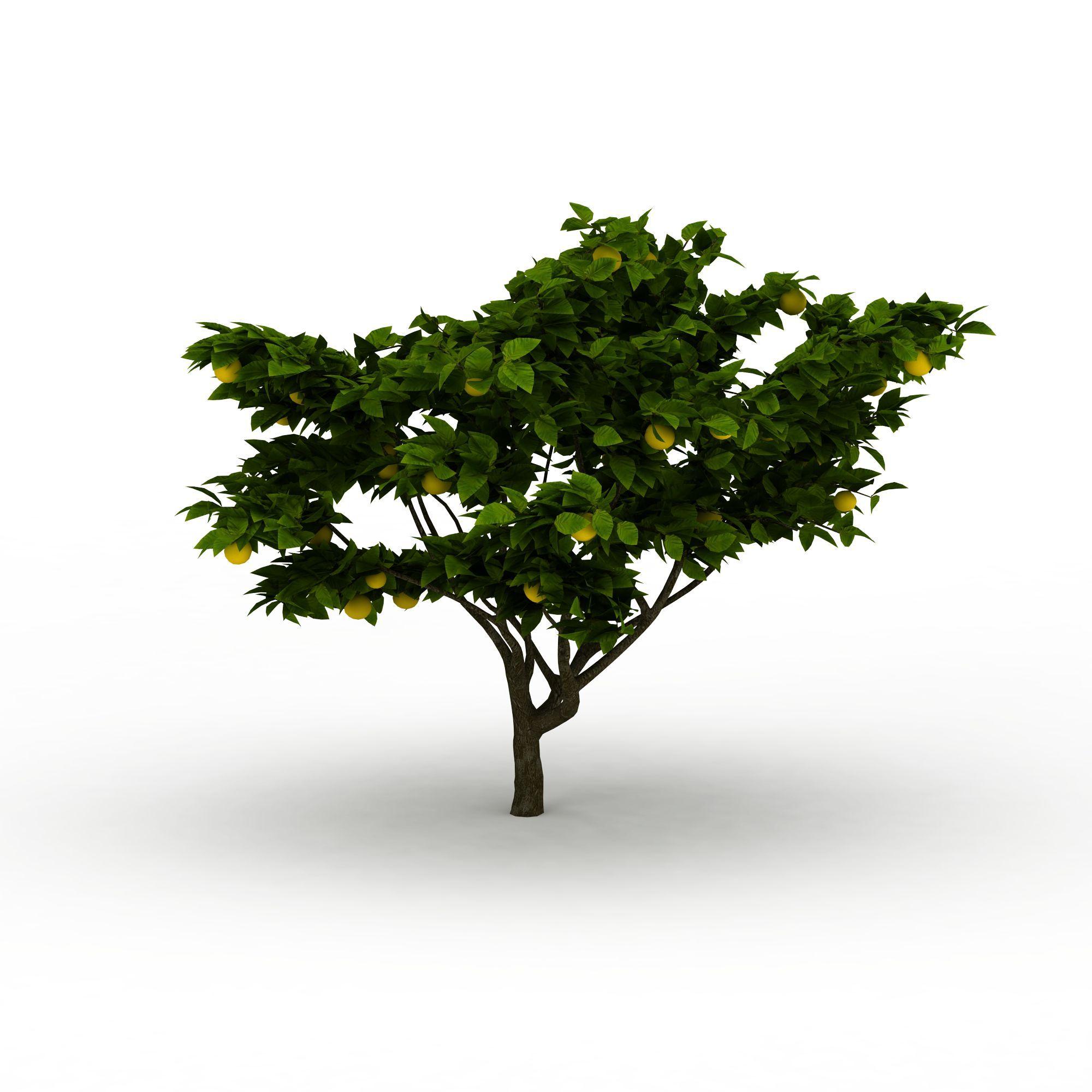 植物 树 橘子树3d模型 橘子树png高清图  橘子树高清图详情 设计师 3d
