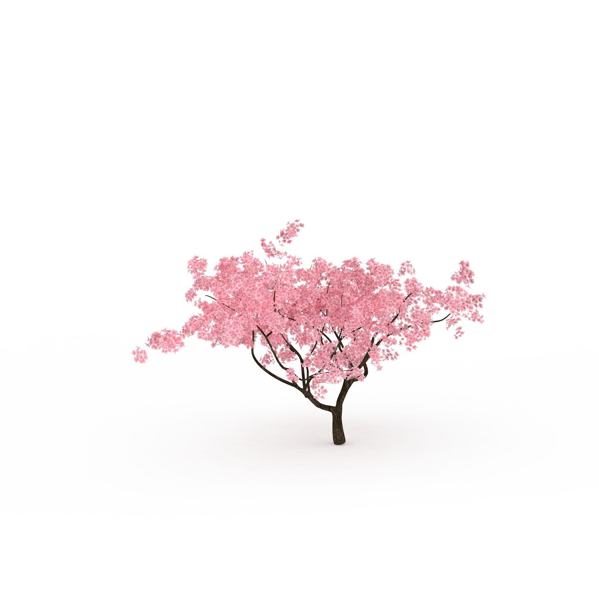 梅花树高清图下载