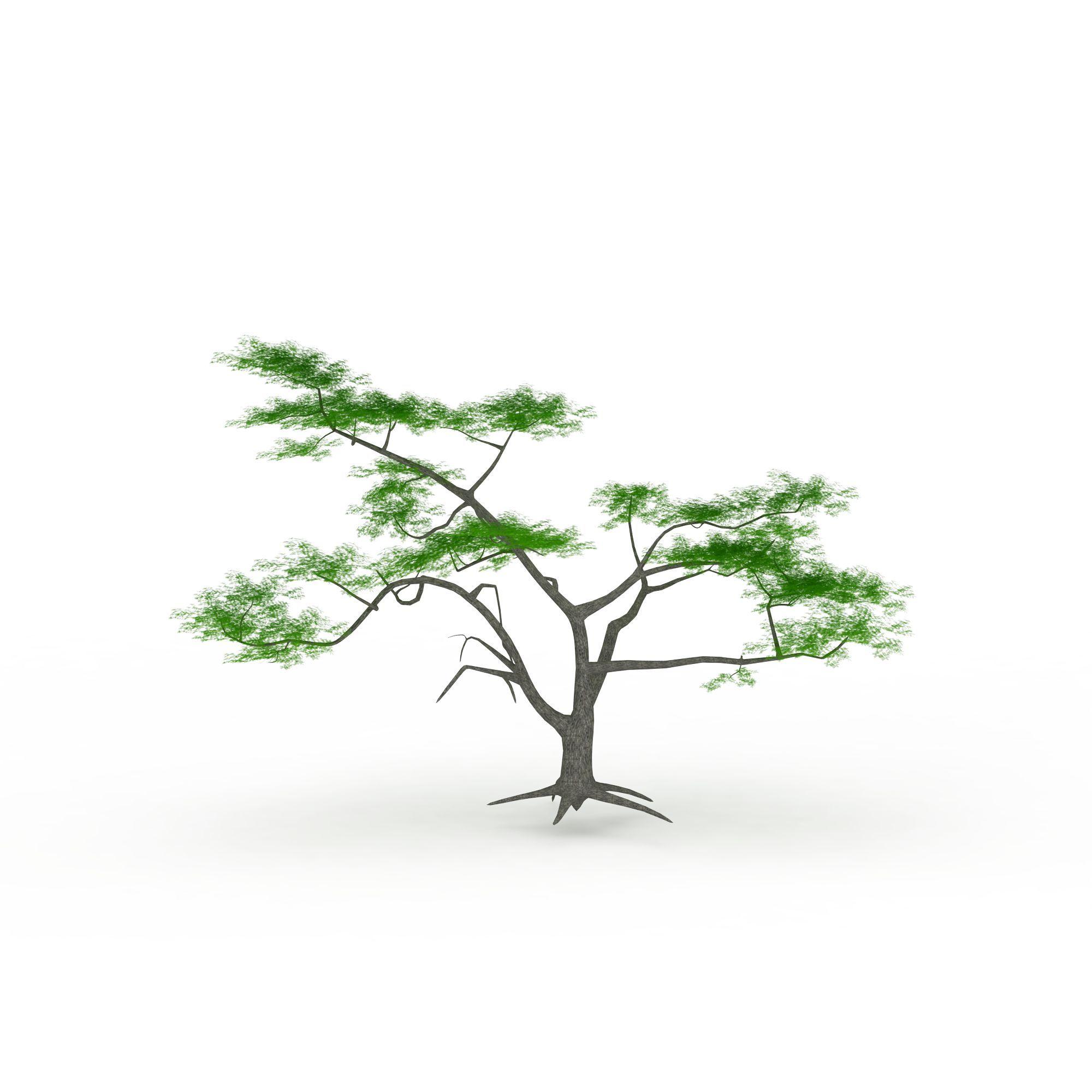 观赏性松树图片_观赏性松树png图片素材_观赏性松树图