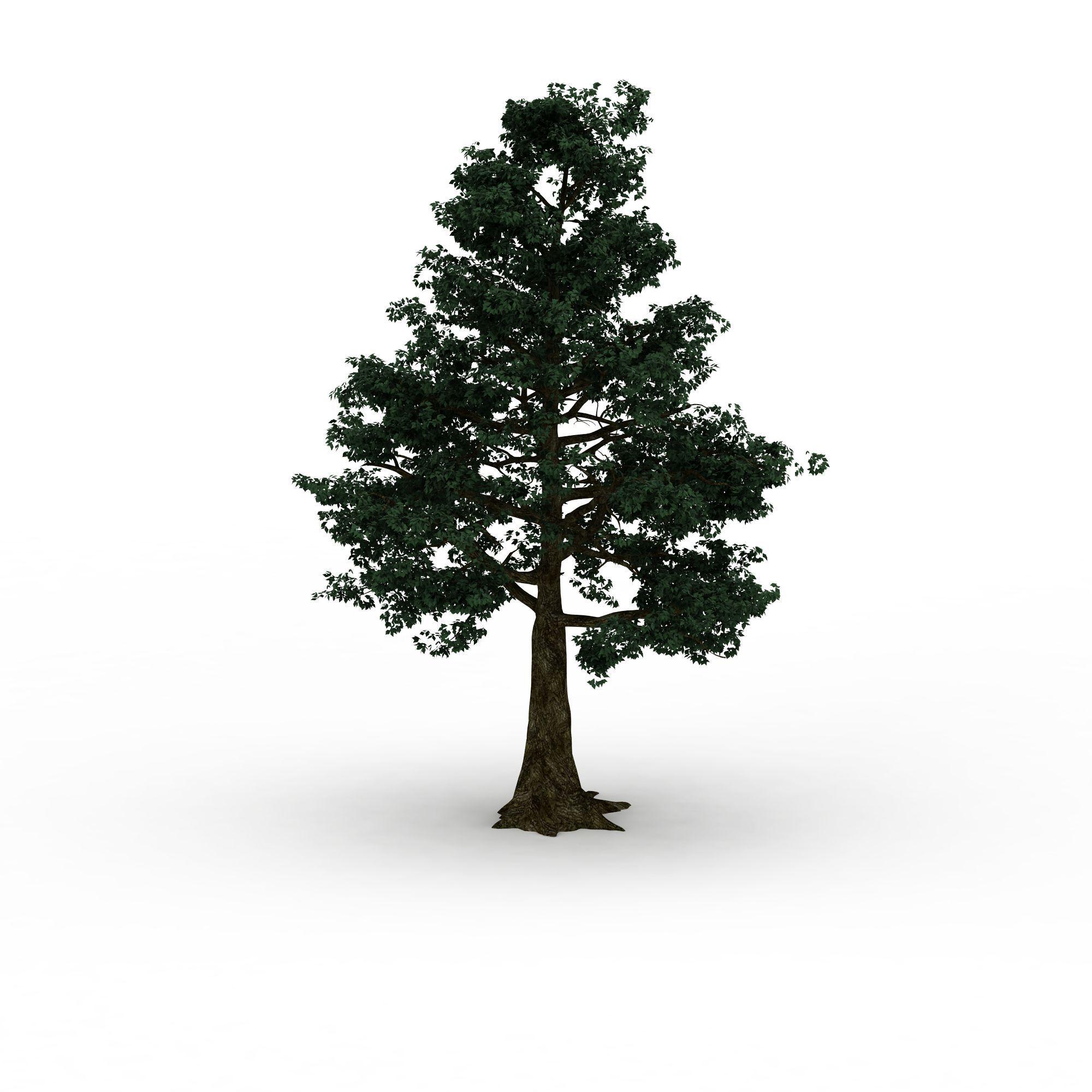 园林树高清图下载