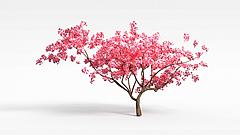 梅花树模型3d模型