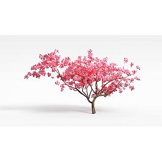 梅花树3d模型